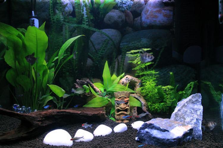 Types of Freshwater Aquarium Snails