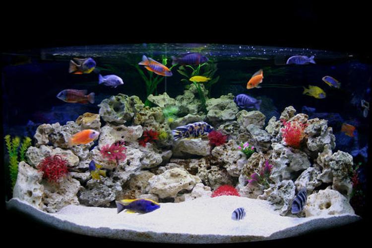 Stocking a Brackish Aquarium