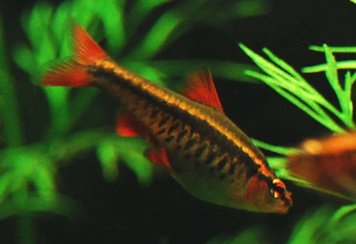 Stocking Your Tank with Schooling Fish