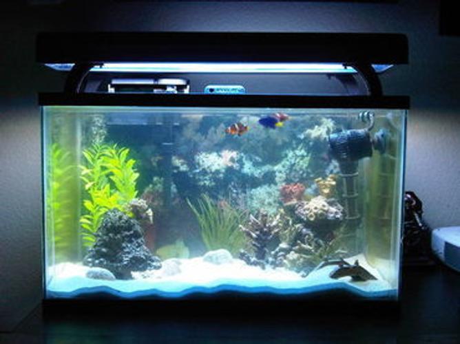 Trending: Compact Aquarium Equipment