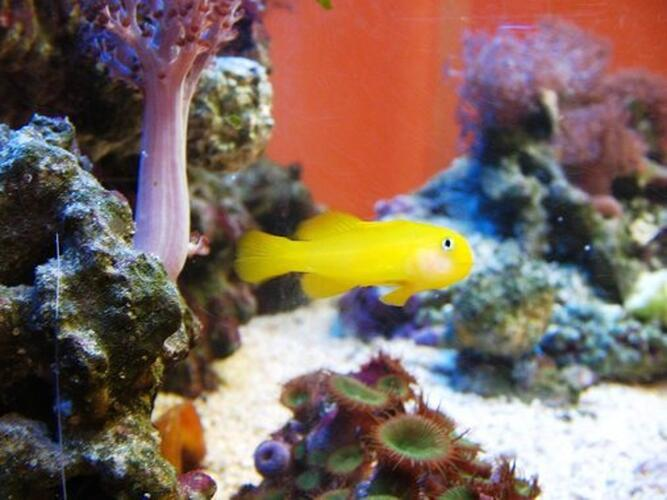 Media Reactors - An Innovative Approach to Aquarium Filtration