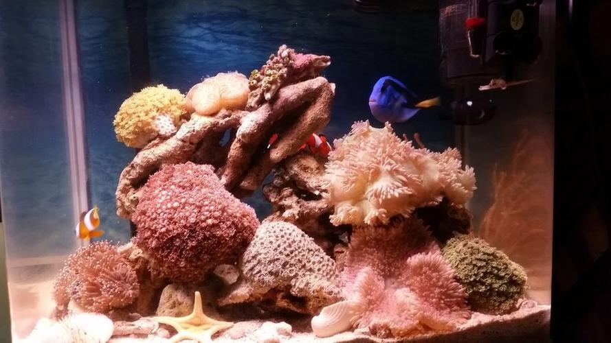How to Treat Saltwater Aquarium Parasites with Freshwater