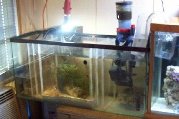 What Is A Refugium Ratemyfishtank Com
