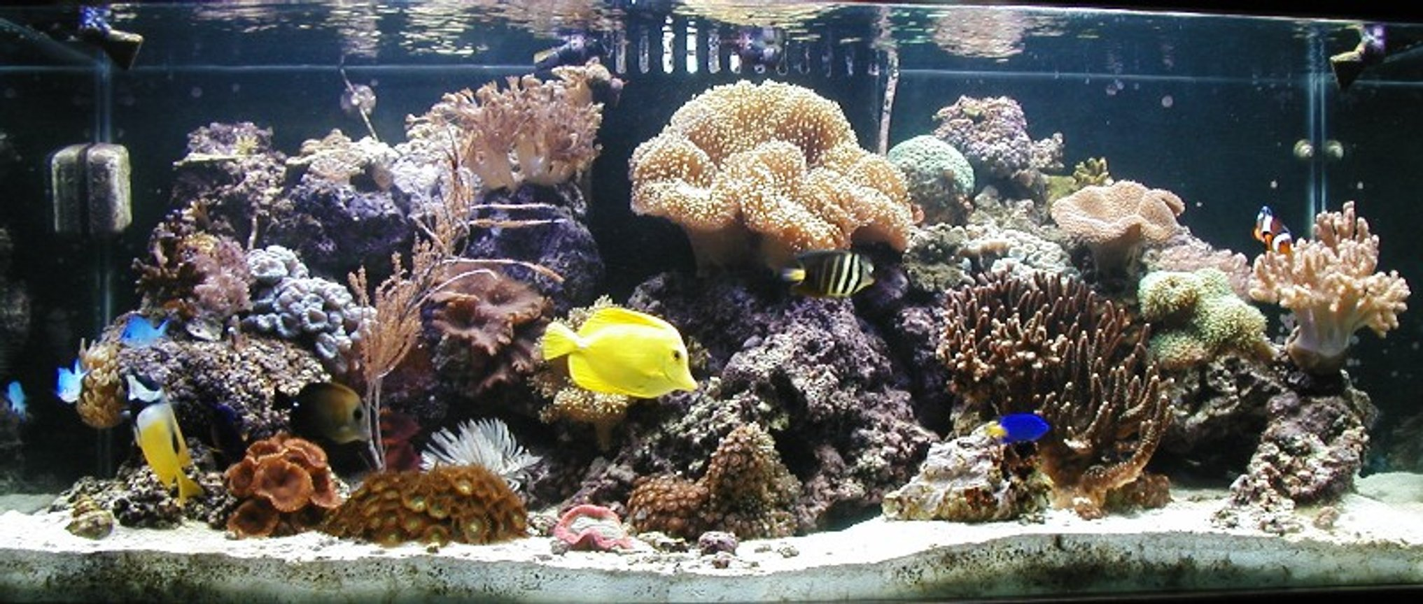80 gallons reef tank (mostly live coral and fish) - 80g Reef with center overflow and Eco-system filtration, 2-250w Iwasaki MH and 2-110w VHO Actinic. Auto topoff