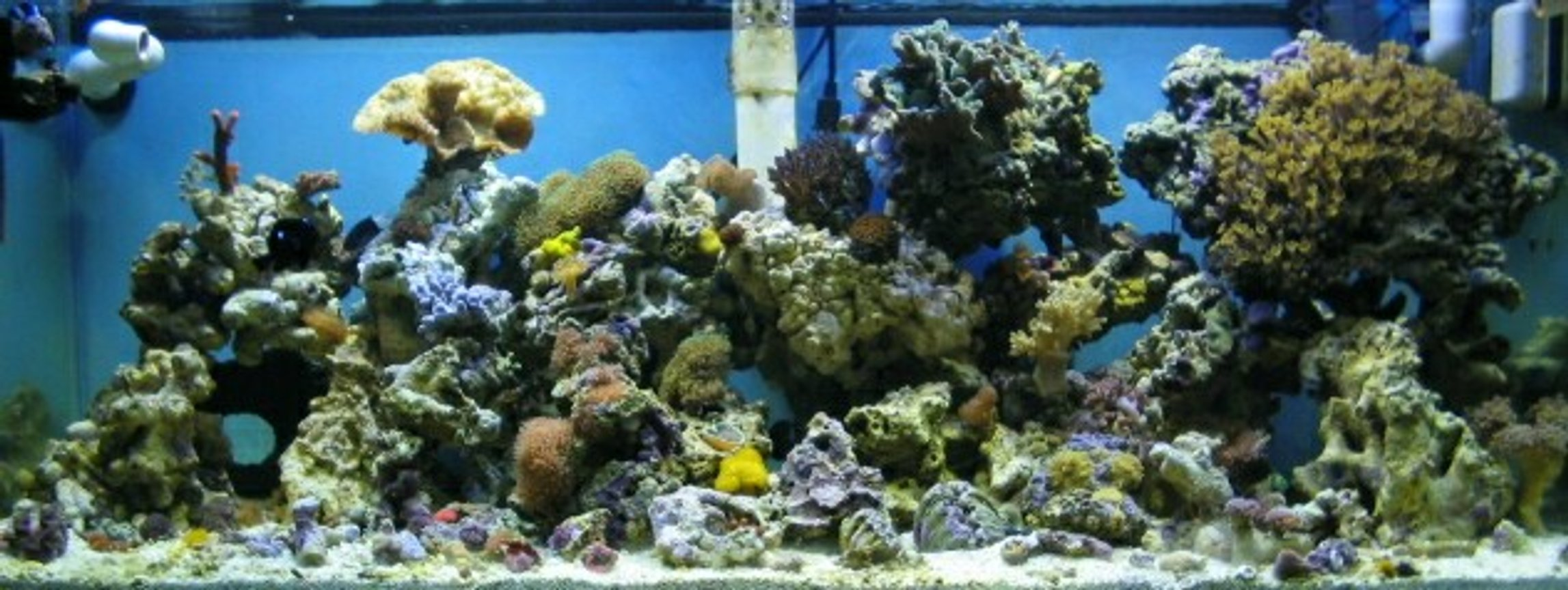 reef tank (mostly live coral and fish) - 36 gallon corner bowfront:canister filter;powersweep powerhead;87 watt power compacts;2-20 watt flourescents;and no skimmer........about 75 lbs. of live rock...corals include 7 different colors of mushrooms including two different colors of elephant ears,5 colors of ricordia,27 different colored colonies of zoo's,1 sarcophyton,2 hammerheads,1 fogspawn,1 blostemus merlotti,yellow polyps,star polyps, 10 inch slipper, derasa clam,assorted snails and crabs,black clown,2 damsels, it's about 5 months old