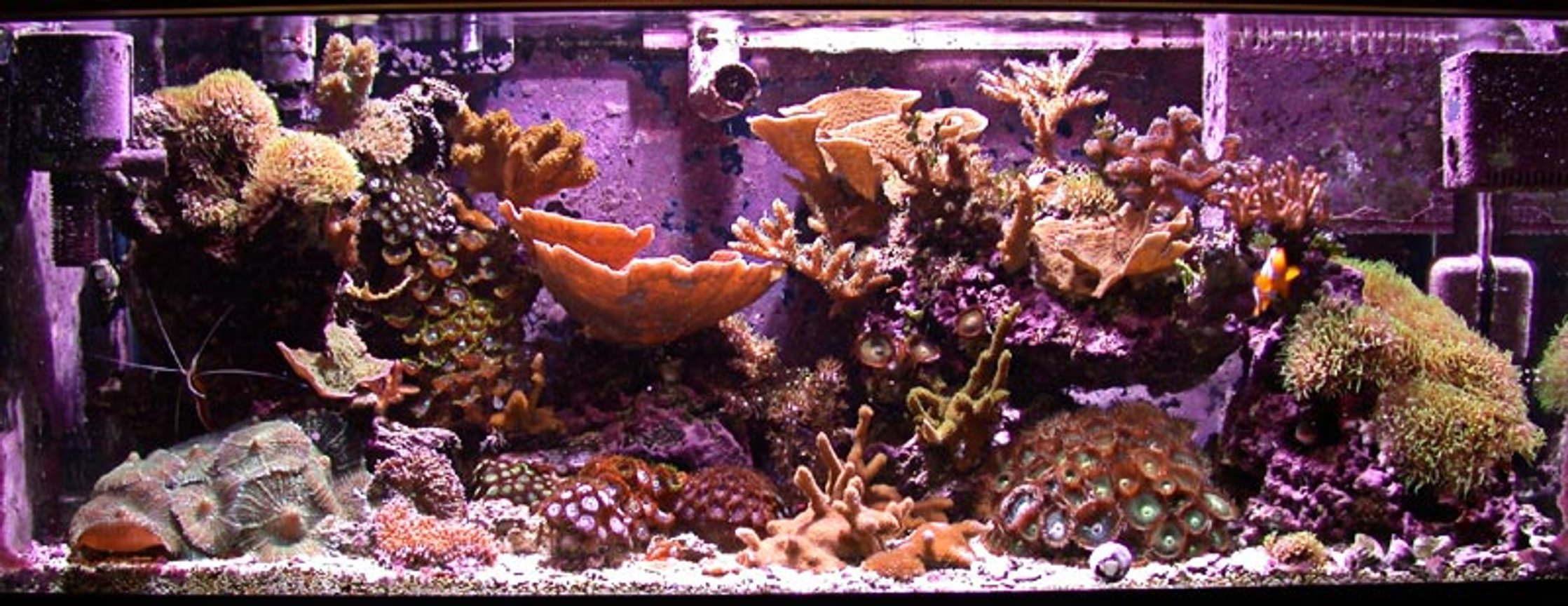 reef tank (mostly live coral and fish) - 20g SPS Nano Reef