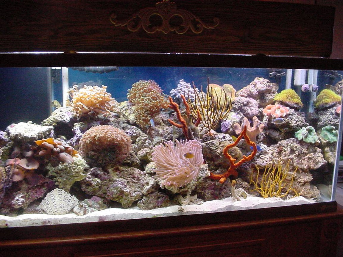75 gallons reef tank (mostly live coral and fish)