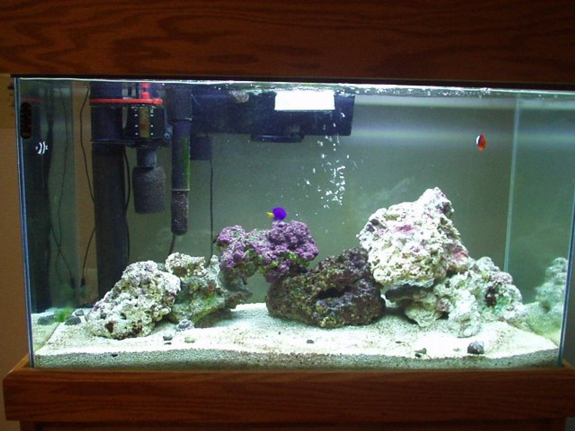 reef tank (mostly live coral and fish) - 29 Gal Reef ( only two months old )