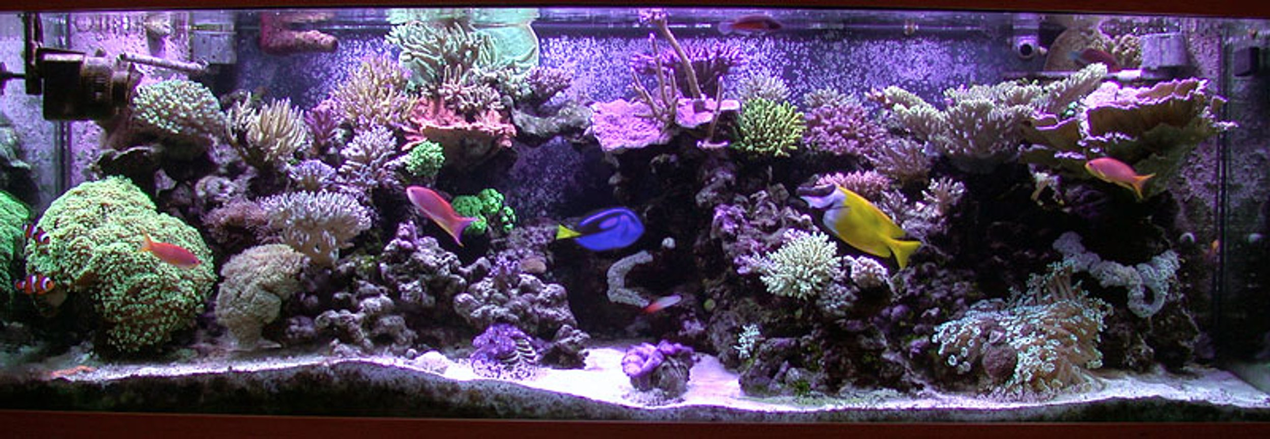 reef tank (mostly live coral and fish) - 180 gallon sps/hardcoral reef tank. Modifed berlin setup, LR/LS.