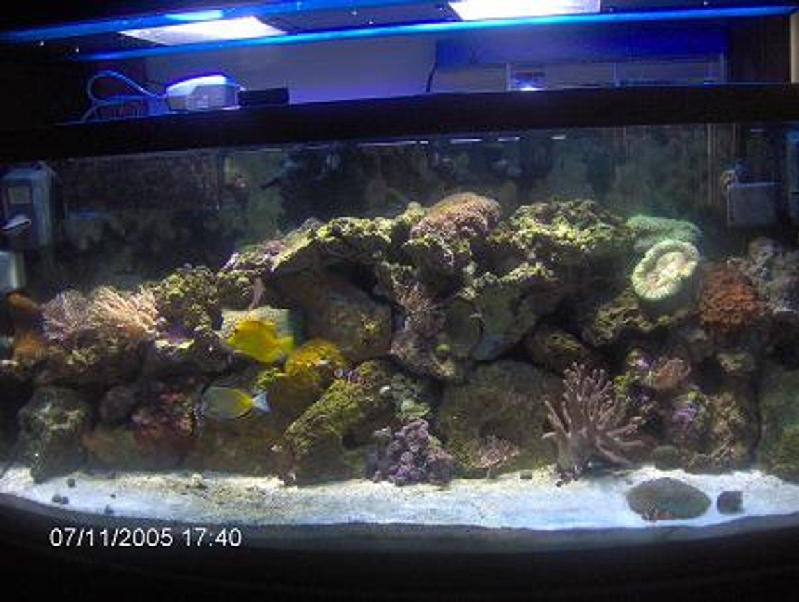 72 gallons reef tank (mostly live coral and fish) - 4 month old tank