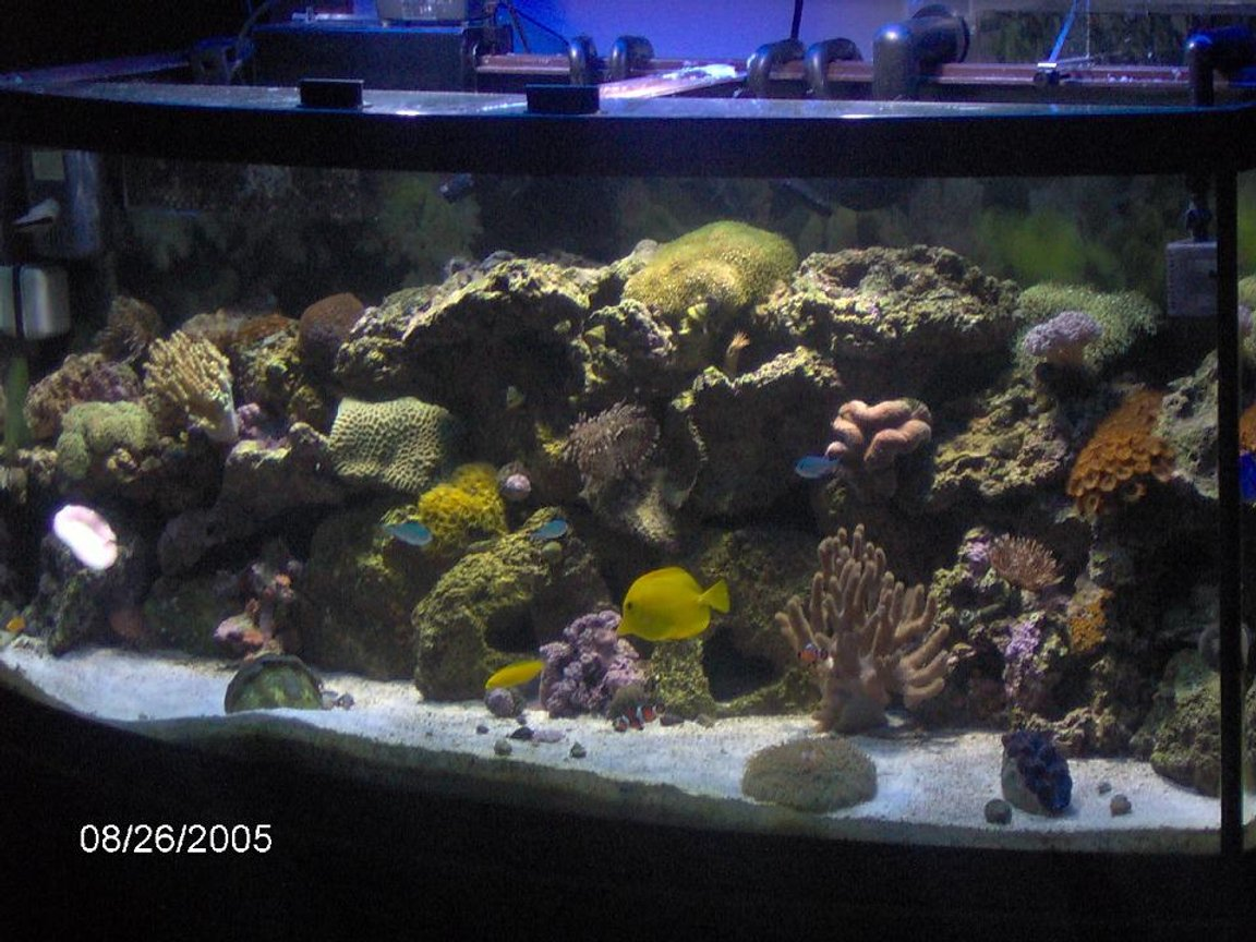 72 gallons reef tank (mostly live coral and fish) - 72 gal