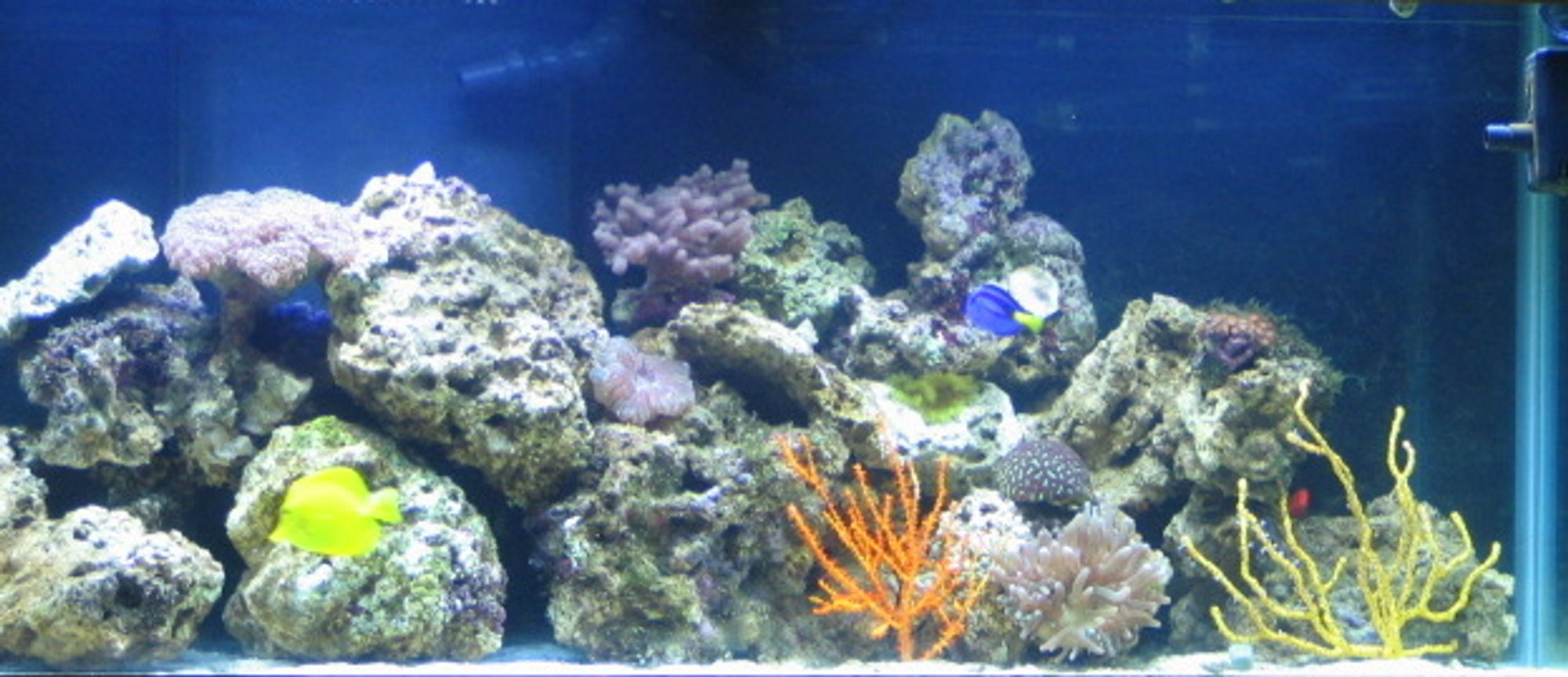 75 gallons reef tank (mostly live coral and fish) - j & k's reef