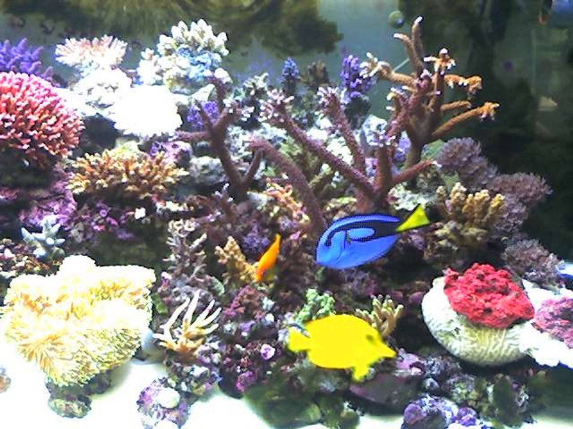 140 gallons reef tank (mostly live coral and fish) - one of the pics of my tank