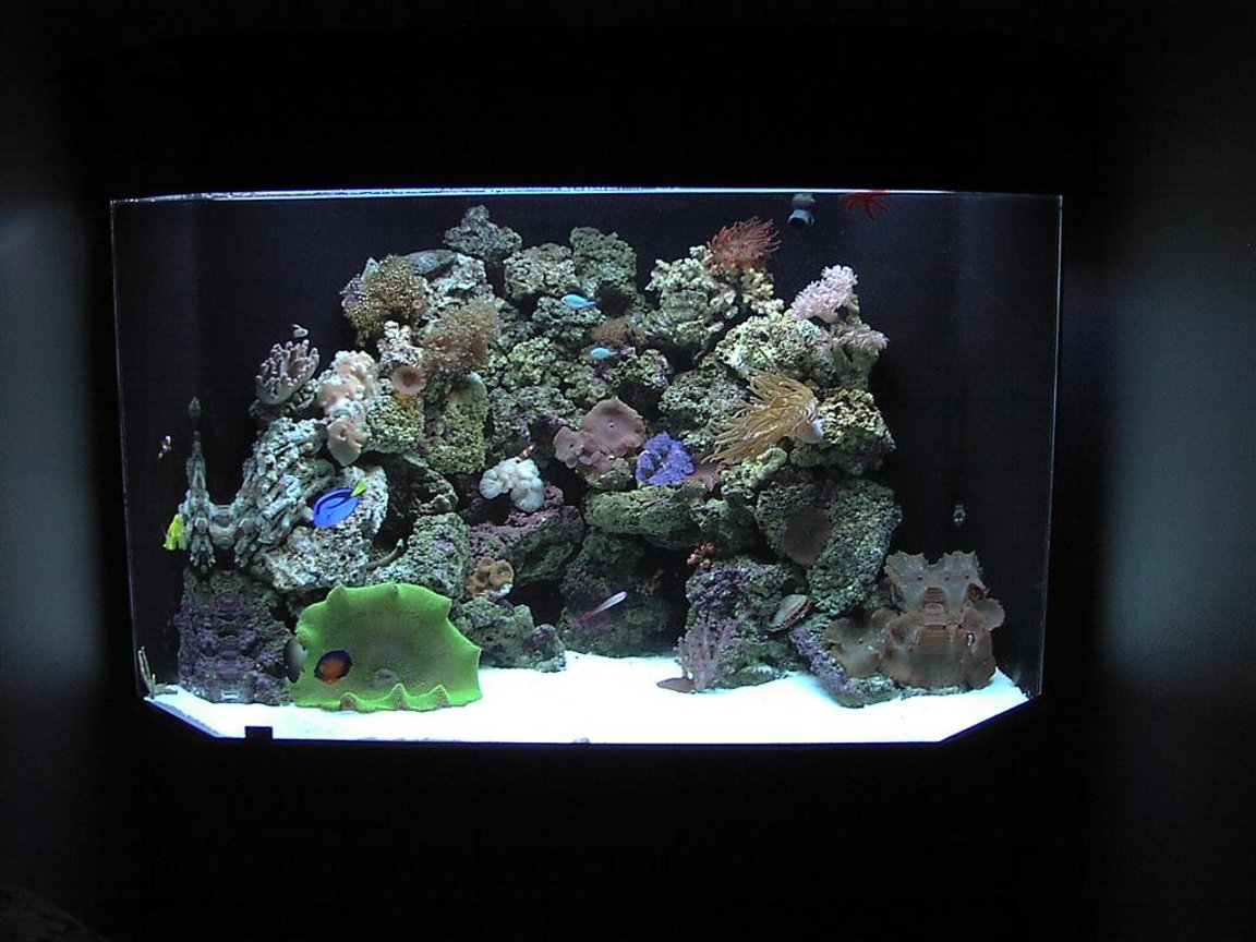 125 gallons reef tank (mostly live coral and fish) - 125 gal corner pentagon reef tank