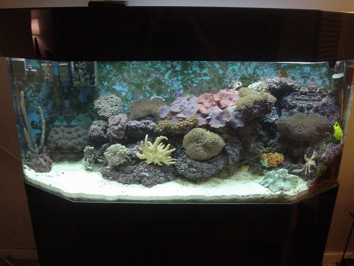 65 gallons reef tank (mostly live coral and fish) - 2-year old. 65 gallon reef tank. Soft corals - mushroom corals, leathers, and polyps123.