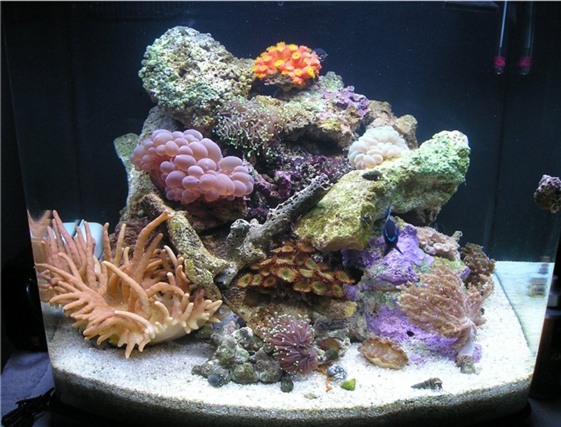 reef tank (mostly live coral and fish) - 24 gal nano cube (fish are hiding)