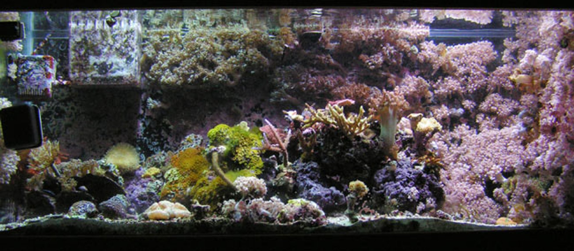 reef tank (mostly live coral and fish) - Full Tank pic (small about a year ago).
