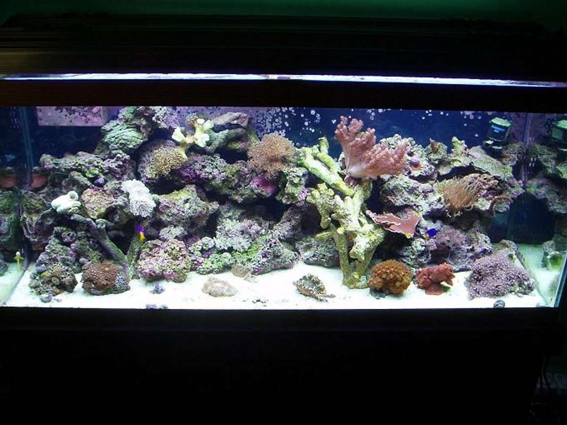 75 gallons reef tank (mostly live coral and fish) - 75G reef with mixed live rock, kaelini, lalo, fiji, tonga plate, tonga, branch, and deep water and more * i will be updating my pic i have alot more coral in the system now