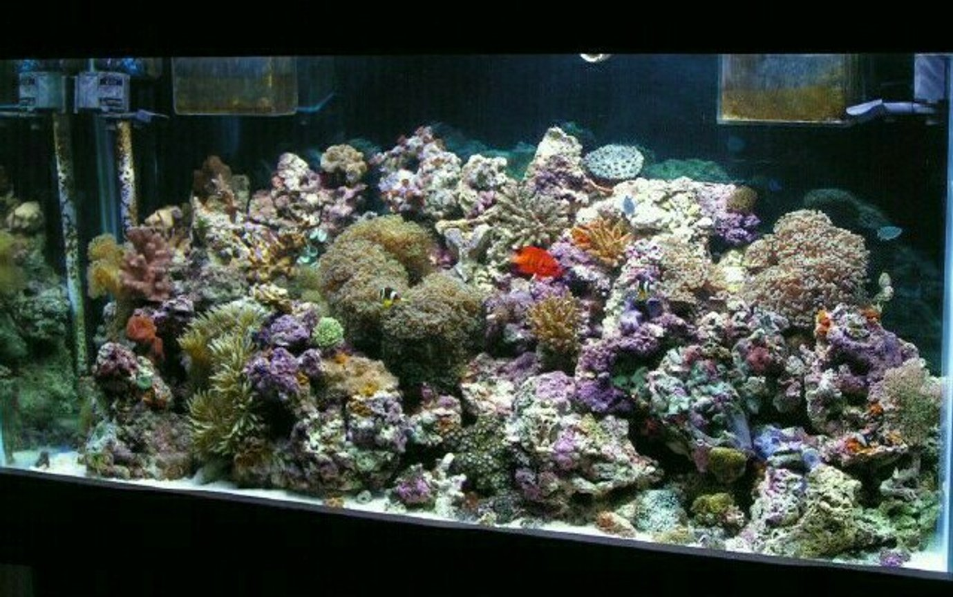 reef tank (mostly live coral and fish) - 90 gallon reef. 125ls live rock. skim coat of live sand. 2 x 250 watt 10,000 k m/h. 2 x 40 watt uri super actinics. aqua c urchin pro skimmer. 20 gallon chambered sump. little giant return pump @ 1000 gph. teco chiller/ heater weekly 5-10 percent water changes and i only test and adjust for alk and calcium....