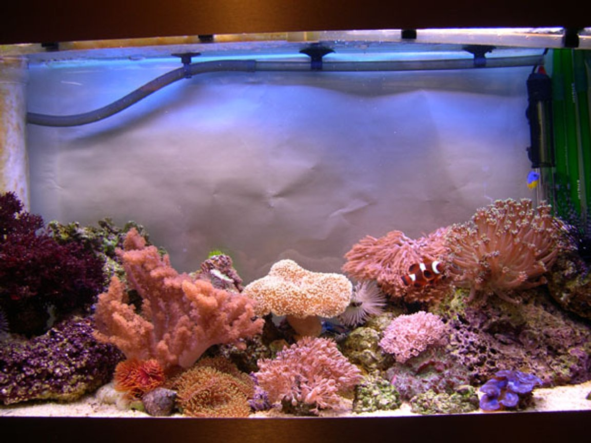 30 gallons reef tank (mostly live coral and fish) - 4 months old and my bank manager is not happy!