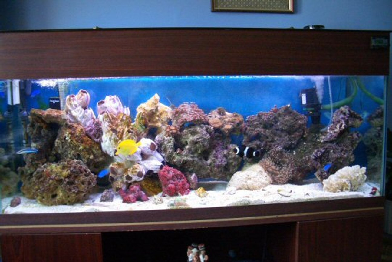200 gallons reef tank (mostly live coral and fish) - this is now with live rock, live coral two anemones bubble and sand. also has red shrimp(came with rock as did vey small starfish) 120gallon tank all doing well would now like couple more bits of rock and coral