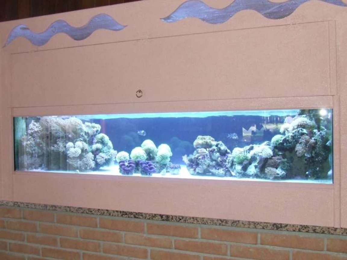 250 gallons reef tank (mostly live coral and fish) - 250l,lps tridacne,xenia