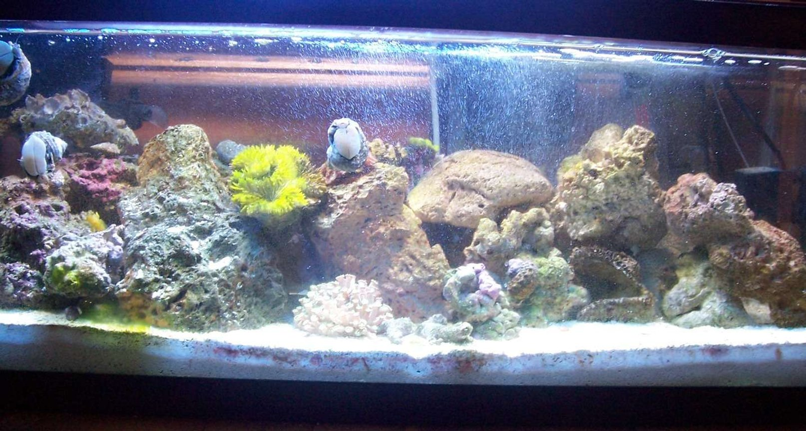 20 gallons reef tank (mostly live coral and fish) - More color