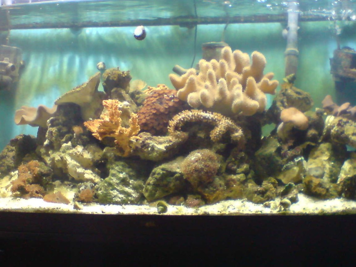 100 gallons reef tank (mostly live coral and fish) - here is my new set up!