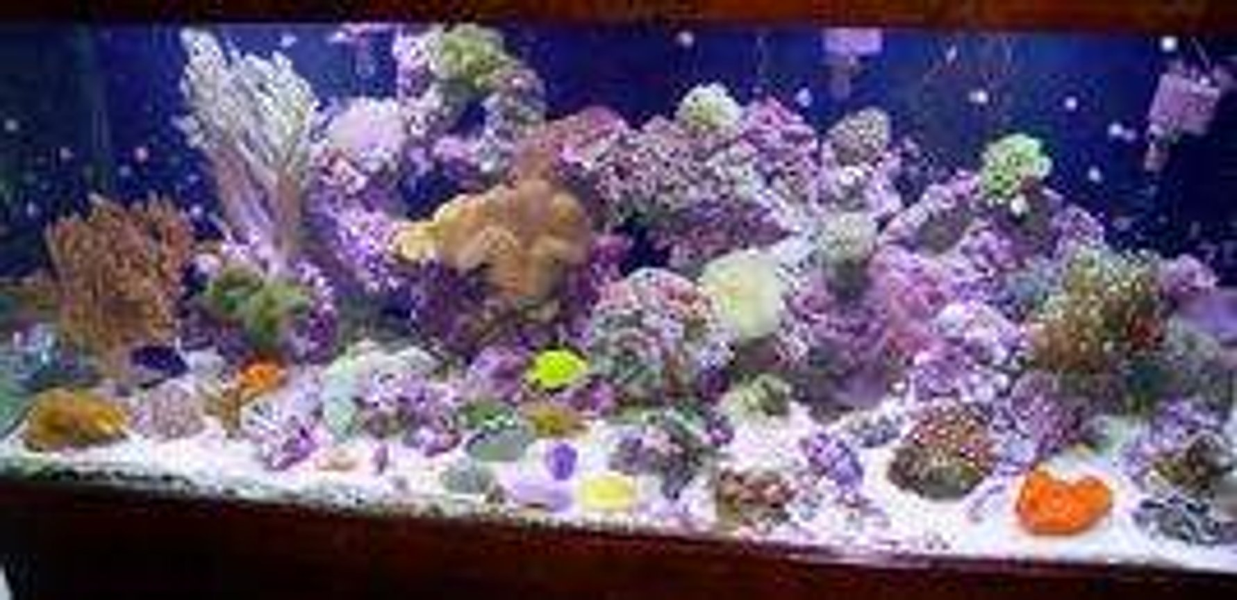 5 gallons reef tank (mostly live coral and fish) - cvbc
