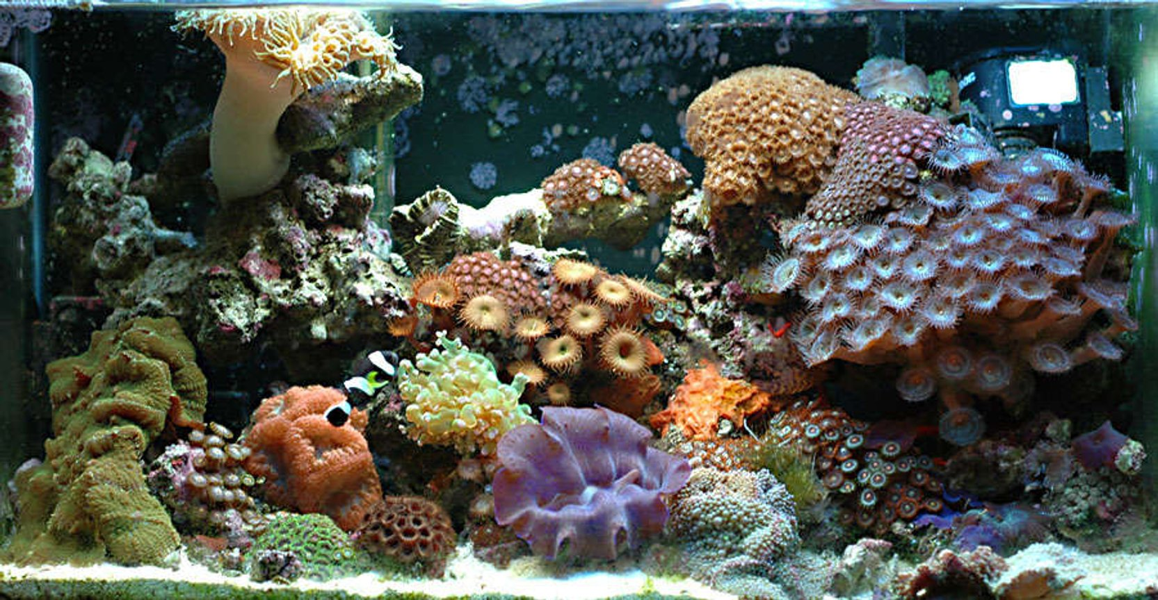 10 gallons reef tank (mostly live coral and fish) - 10 gallon reef tank 1 year old.