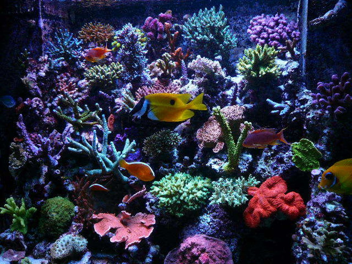 110 gallons reef tank (mostly live coral and fish) - update