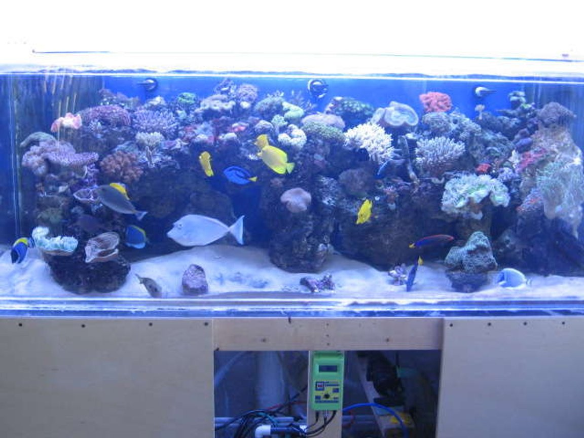 225 gallons reef tank (mostly live coral and fish) - REEF'N