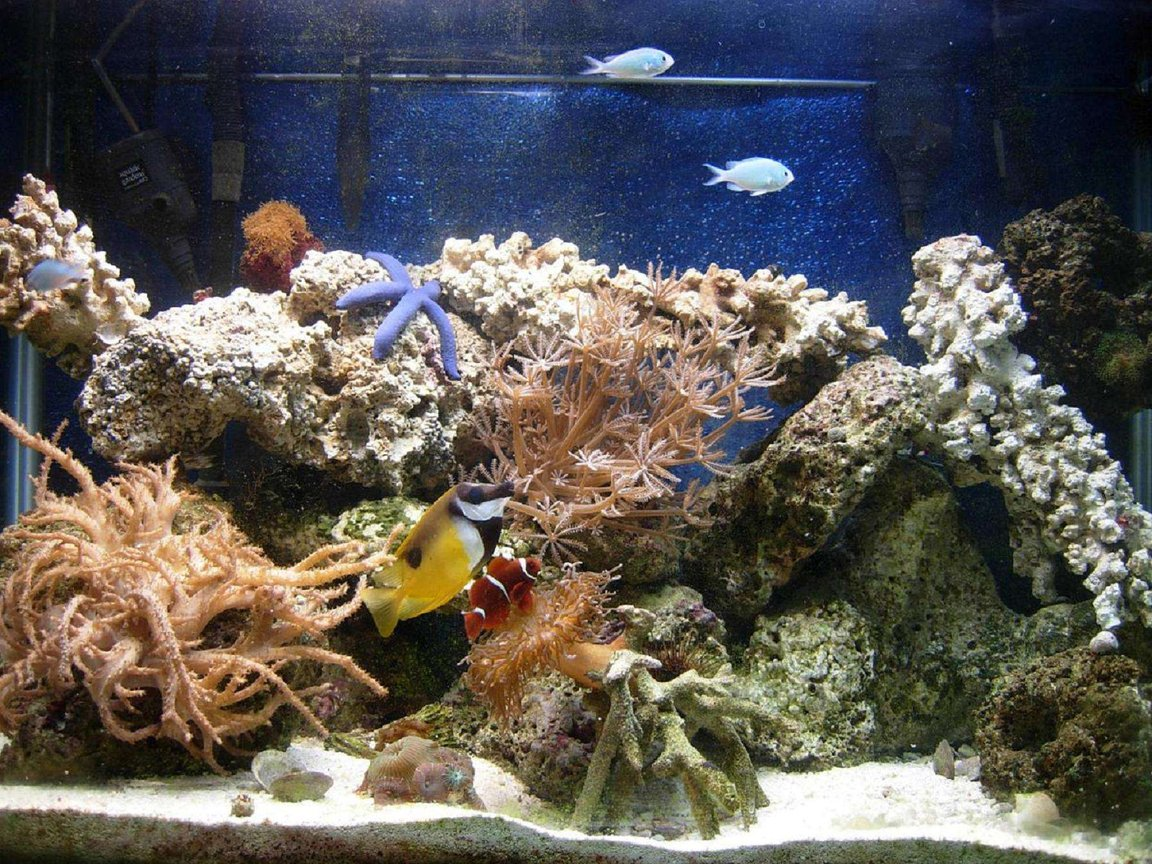 65 gallons reef tank (mostly live coral and fish) - 65 gal, with MH lighting, 8 months old