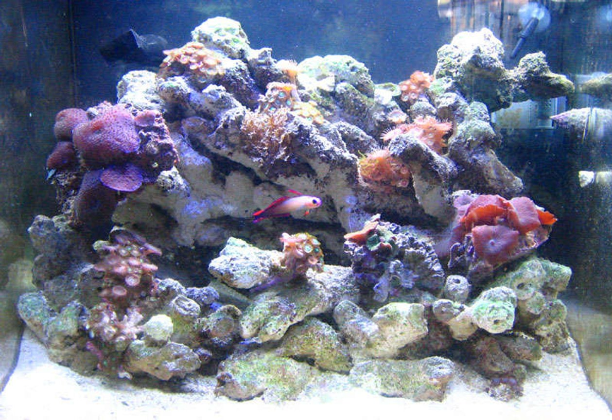 200 gallons reef tank (mostly live coral and fish) - wide shot: 2 month nanno tank, 10 gal
