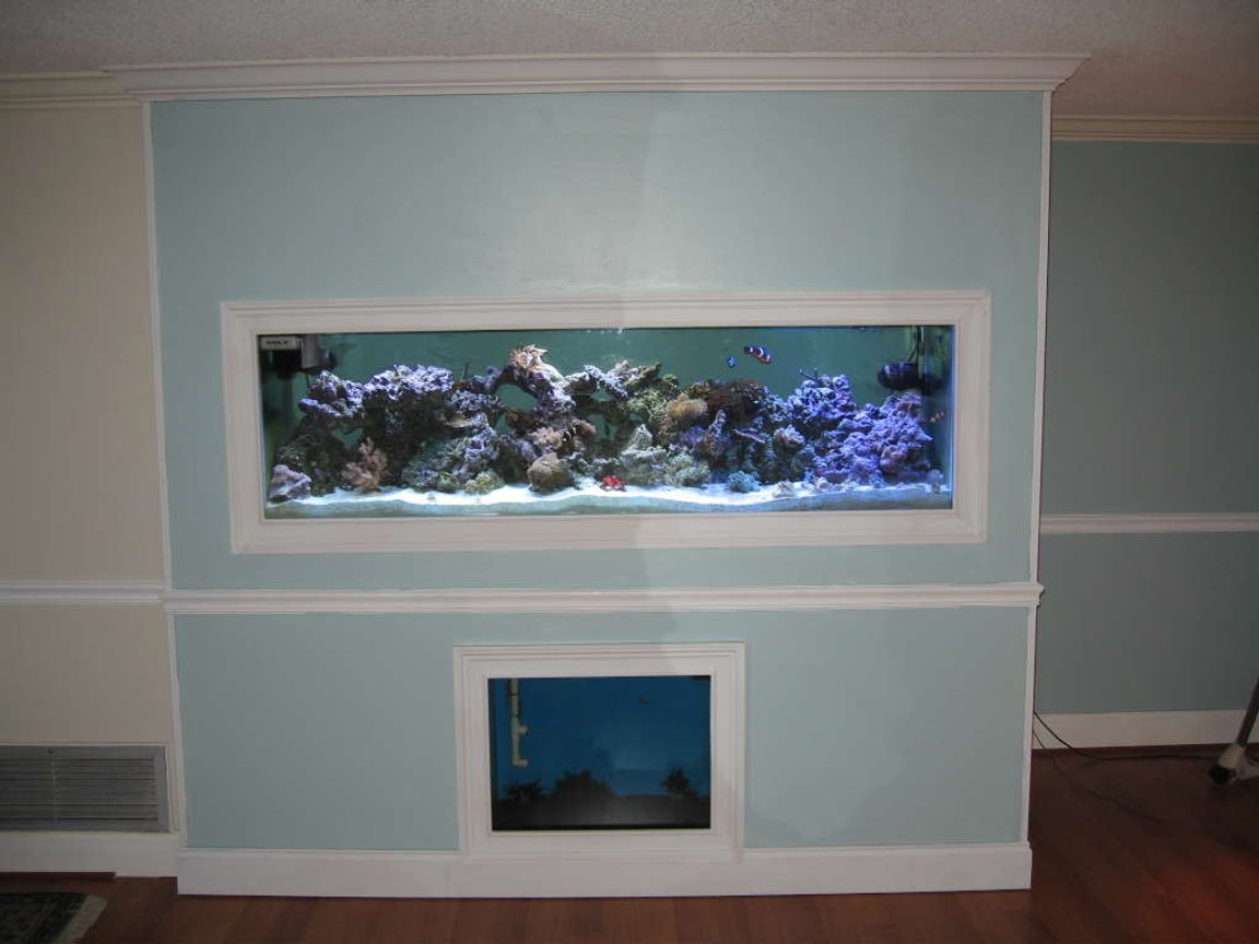 160 gallons reef tank (mostly live coral and fish) - Full view if my 125 inwall with a 55 gallon sump/and 27 gallon refugium viewable