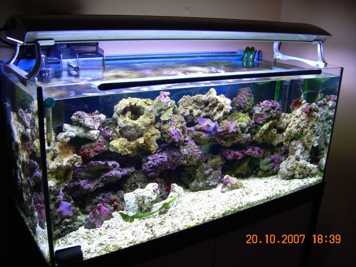 50 gallons reef tank (mostly live coral and fish) - My New Reef Tank.