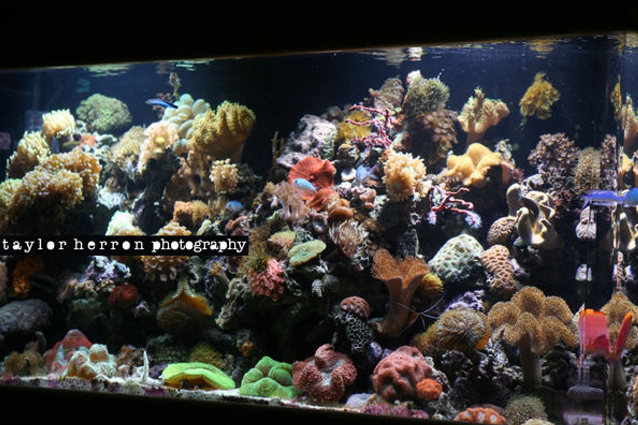 75 gallons reef tank (mostly live coral and fish) - I LOVE MY TANK