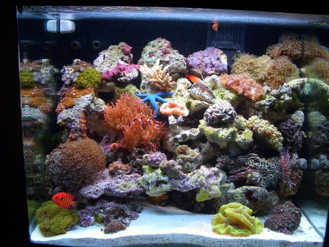 34 gallons reef tank (mostly live coral and fish) - 34 Gallon after 3 months