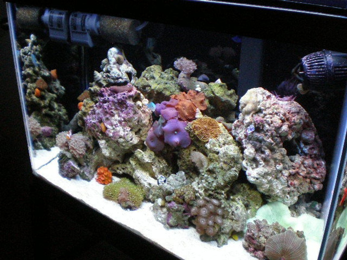 20 gallons reef tank (mostly live coral and fish) - november !!!!!! new pictures !!!!!!