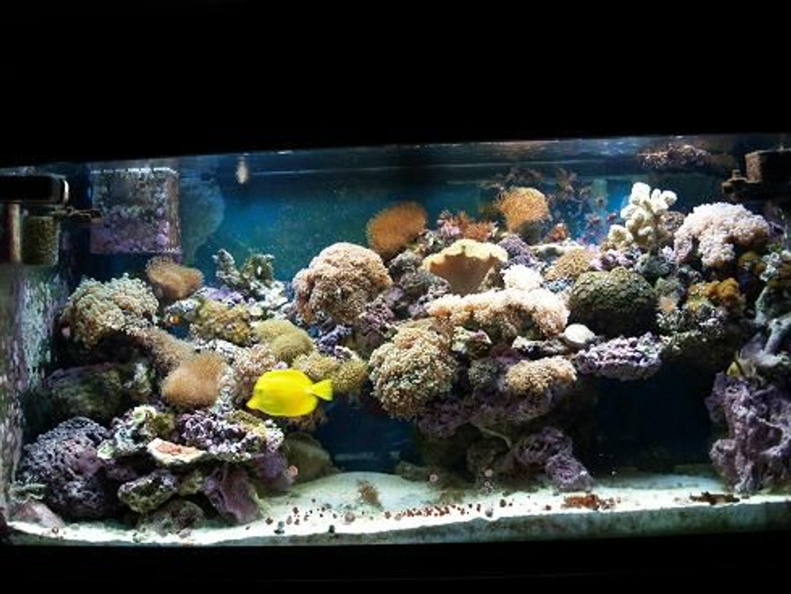90 gallons reef tank (mostly live coral and fish) - 3 years