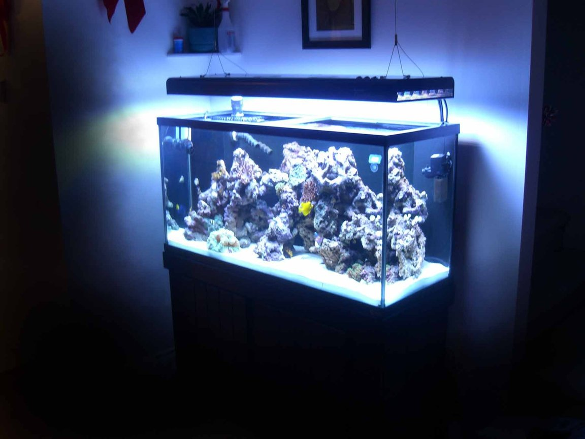 90 gallons reef tank (mostly live coral and fish) - 90g, 33g sump, Aquatinics T5 lighting 100lbs LR
