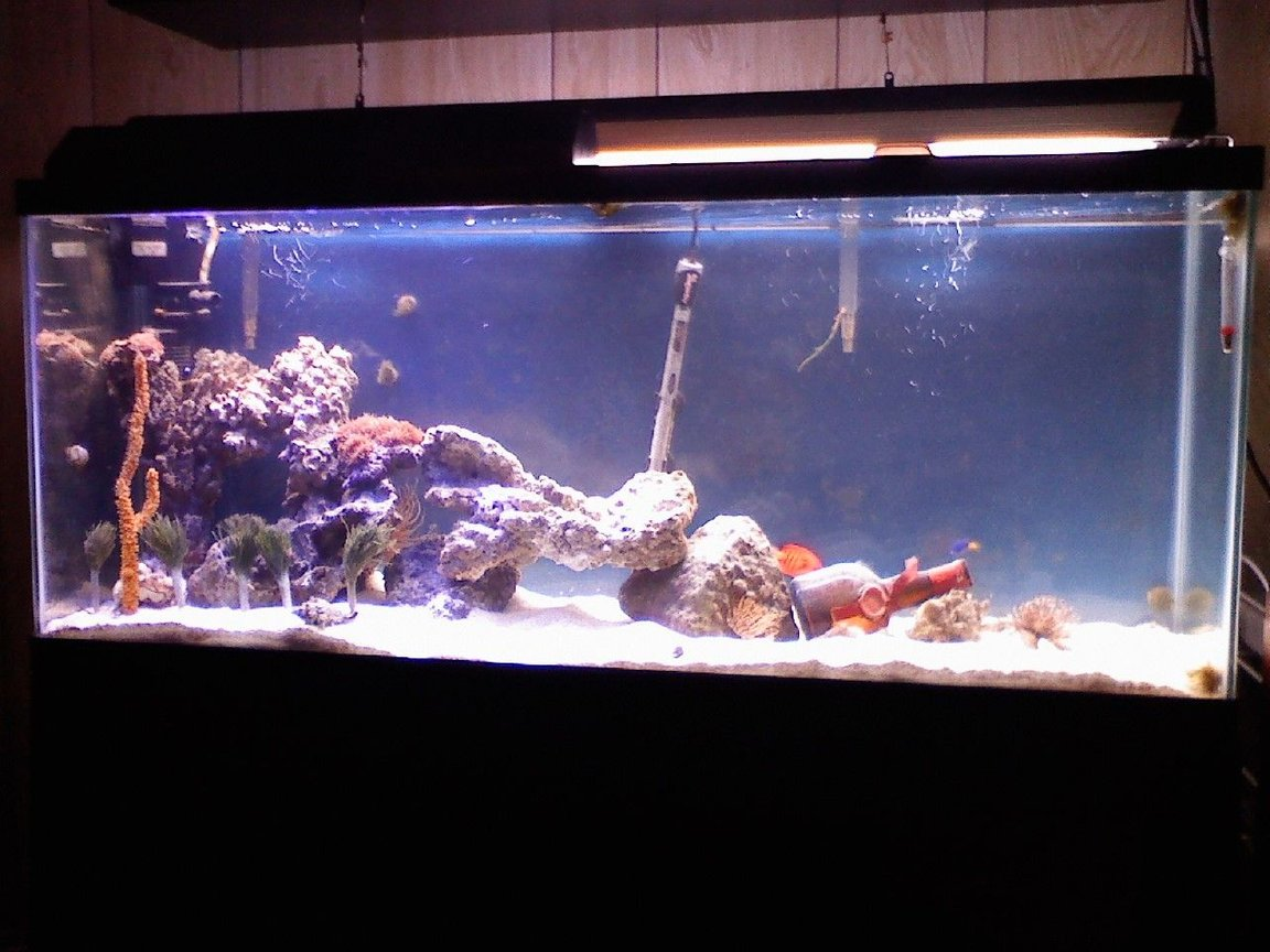 55 gallons reef tank (mostly live coral and fish) - 55 gallon tank..50ish lbs of live rock..flame angel..assorted damsels..snowflake eel...gobies..feather dusters...mushrooms...sponge...sea grass...GM bottle