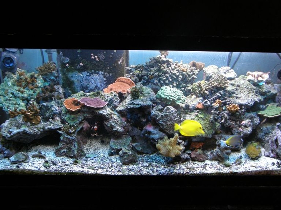75 gallons reef tank (mostly live coral and fish) - 75 gal. trying to get there !