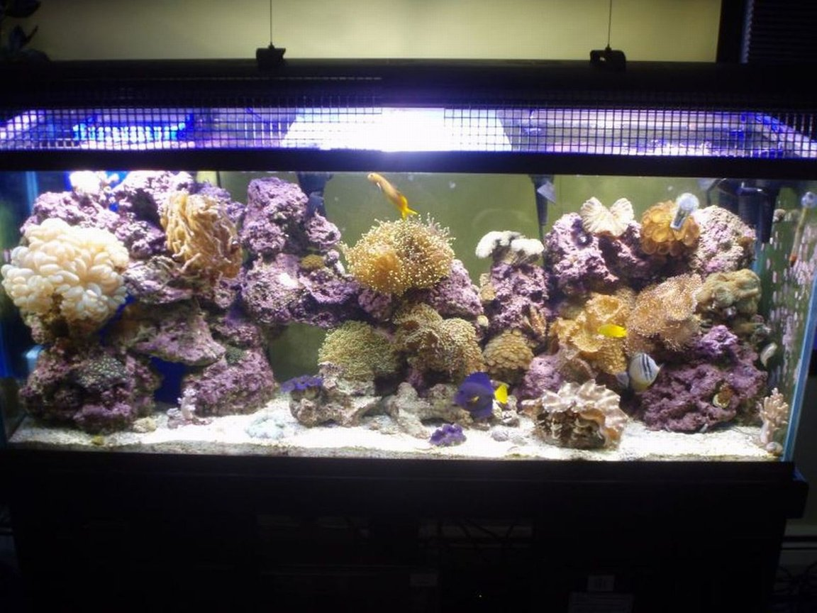 125 gallons reef tank (mostly live coral and fish) - 125 reef. My pride and joy.