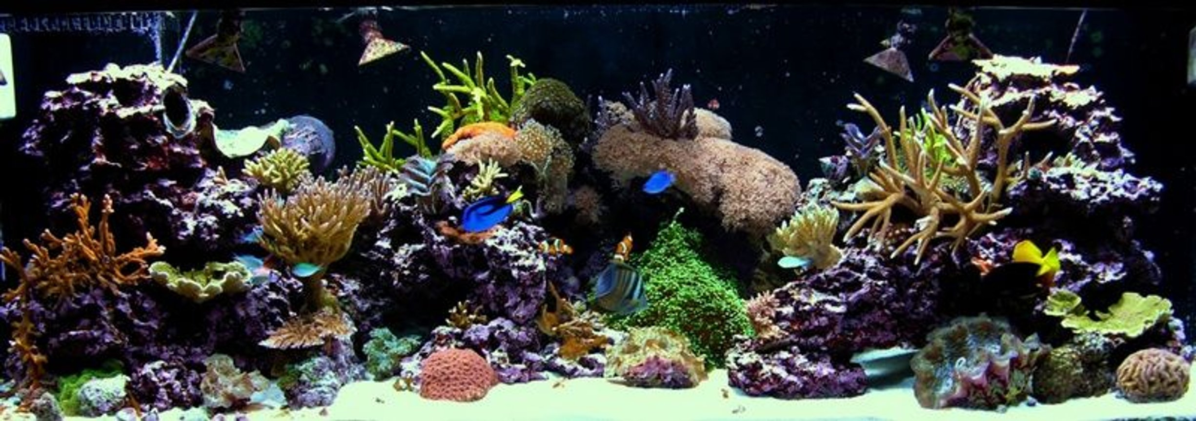 180 gallons reef tank (mostly live coral and fish) - 180G mixed reef