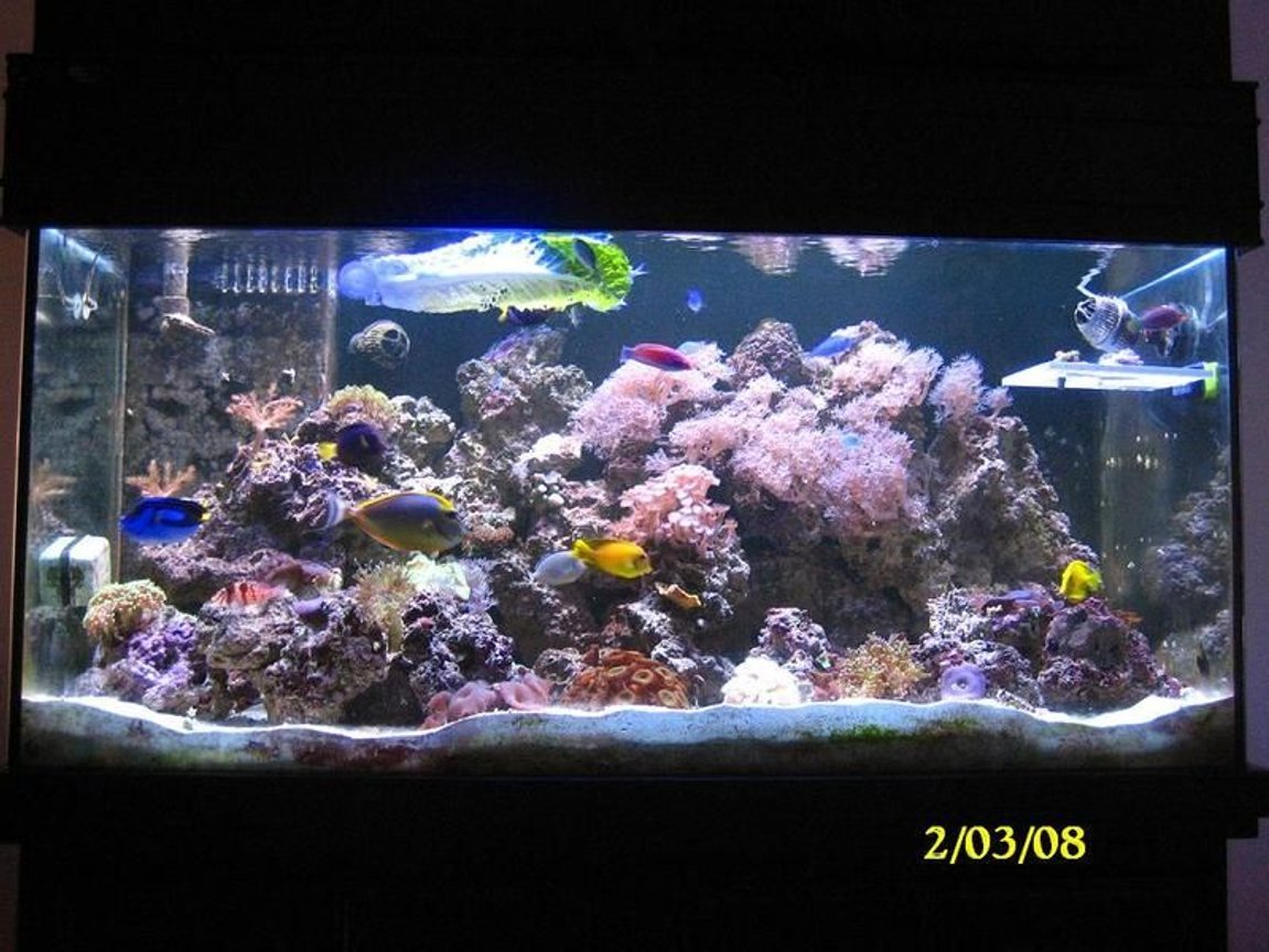 55 gallons reef tank (mostly live coral and fish) - feb 2008