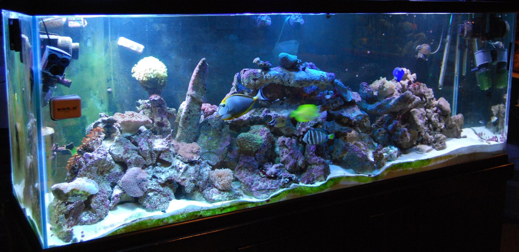 280 gallons reef tank (mostly live coral and fish) - 280g reef