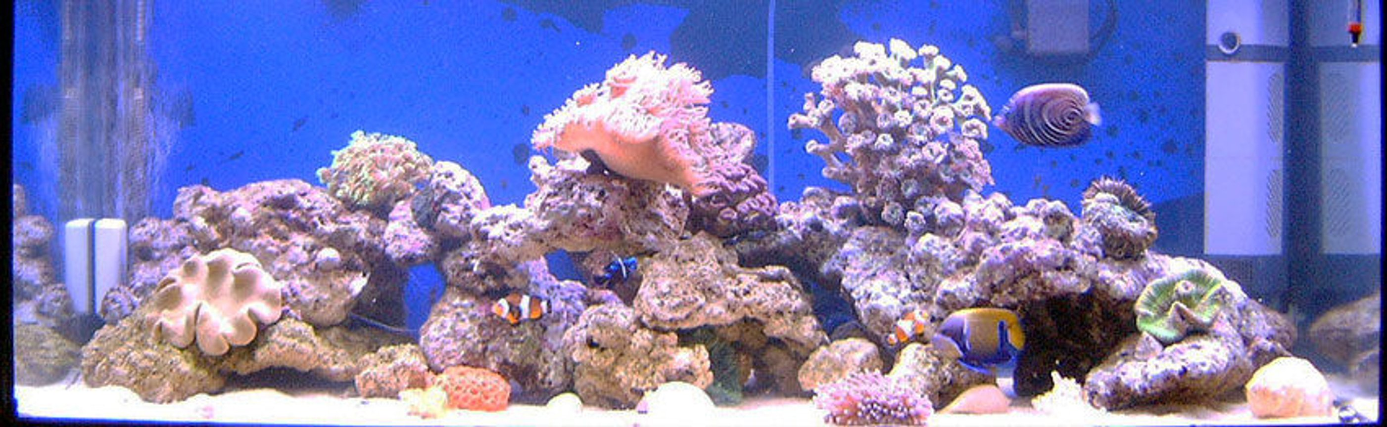 75 gallons reef tank (mostly live coral and fish) - 22 weeks old