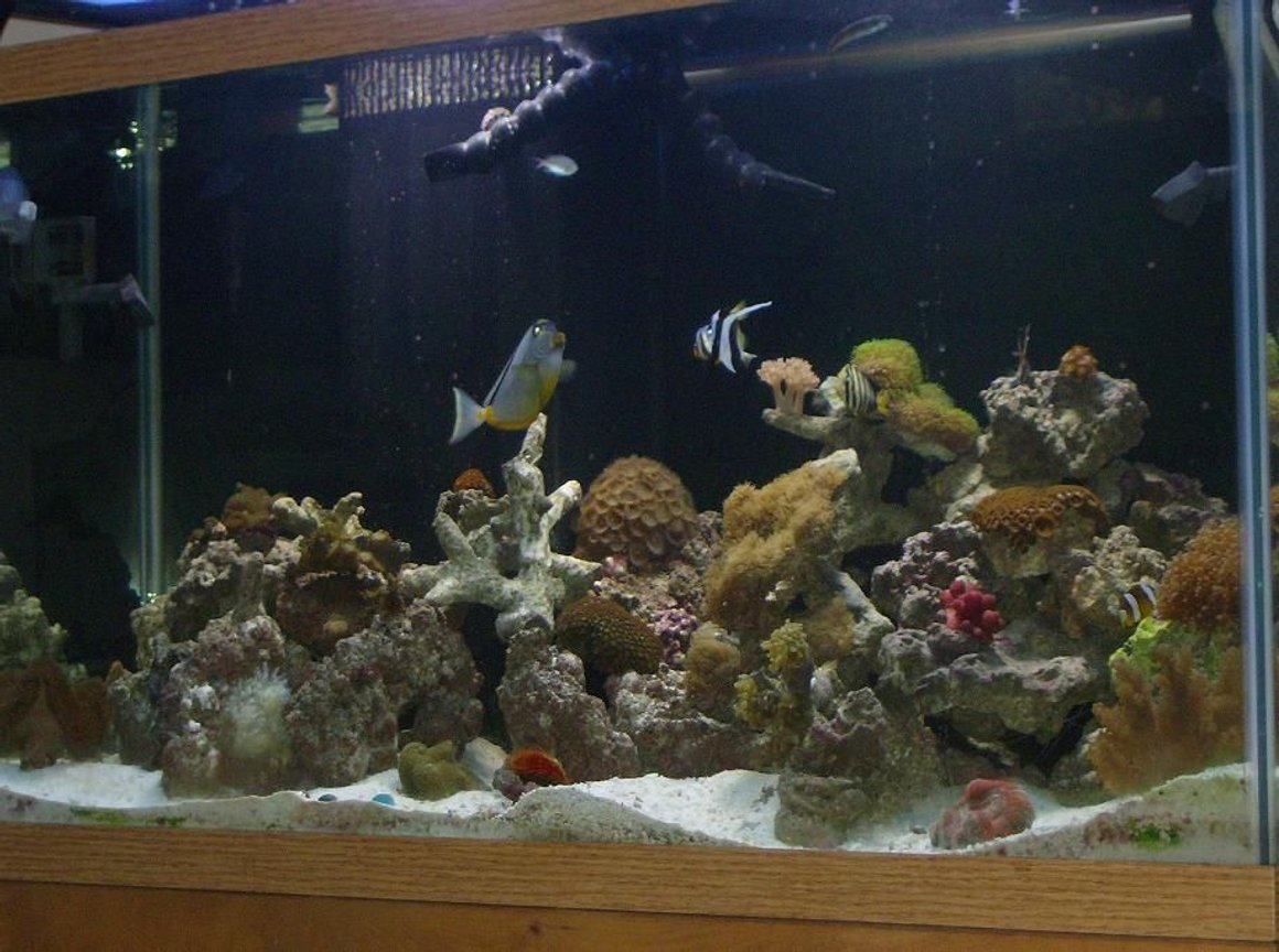 90 gallons reef tank (mostly live coral and fish) - MY 90 gallon reef tank