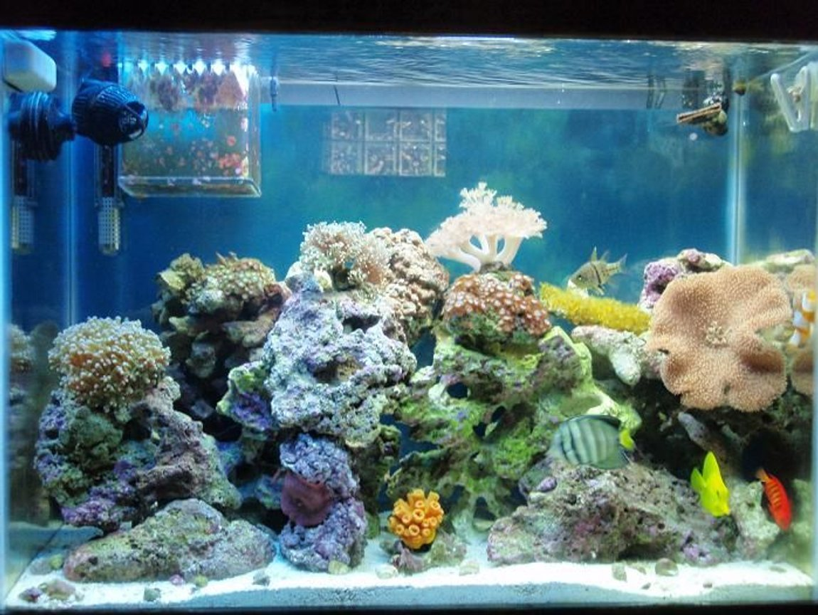 37 gallons reef tank (mostly live coral and fish) - Full tank shot updated. 5 1/2 months later